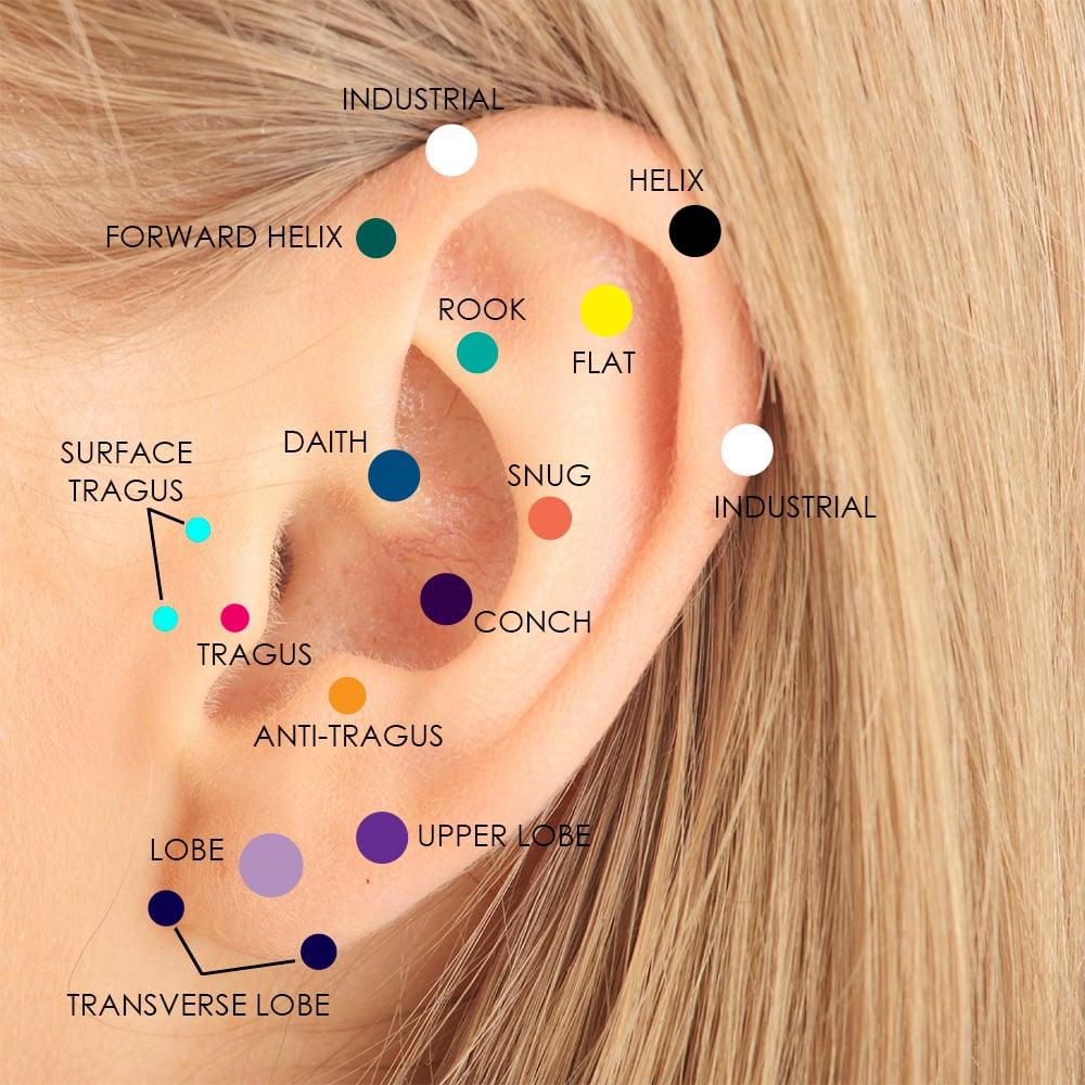 diagram of cartilage piercings